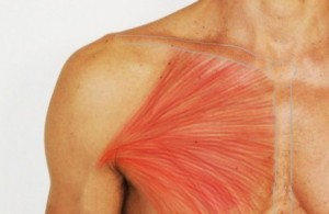 Pectoralis-major-an1-460x300